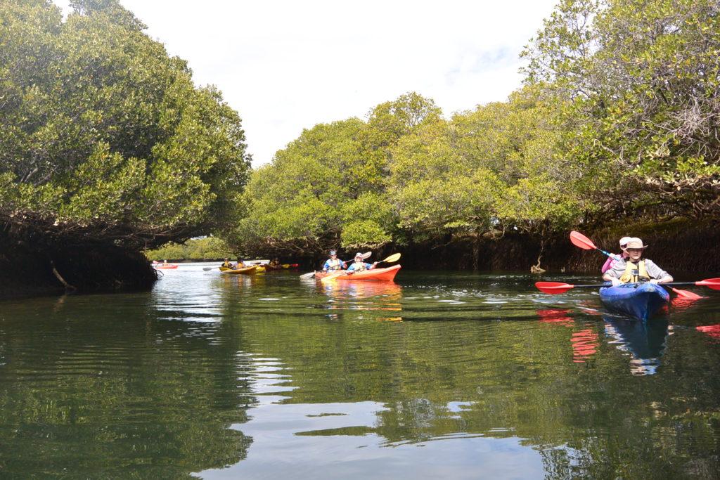 Mangrove explorers Paddling Trail South Australia