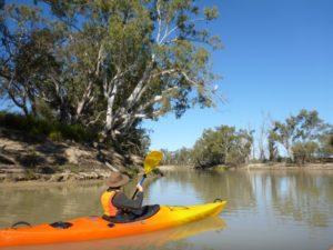 Paddling Katarapko Paddling Trails South Australia