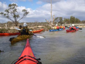Kayak Paddling group Paddling Trails South Australia