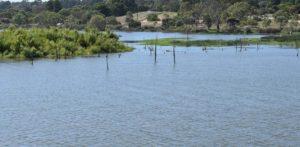 Paiwalla Wetland